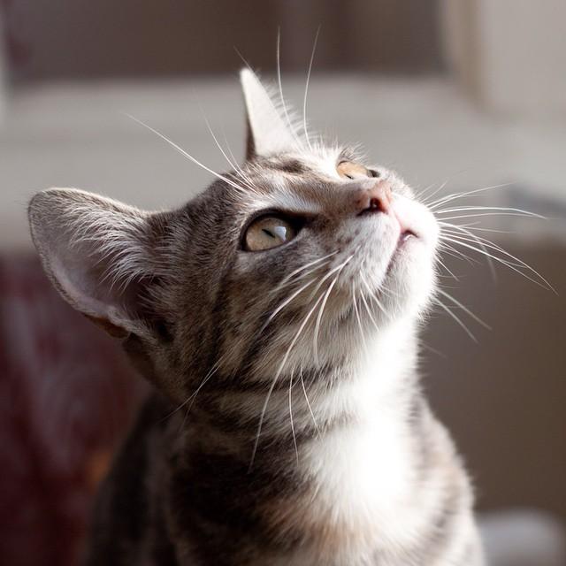 Après 5 jours d'absence, enfin les retrouvailles ! #kitty #cat #scarlett