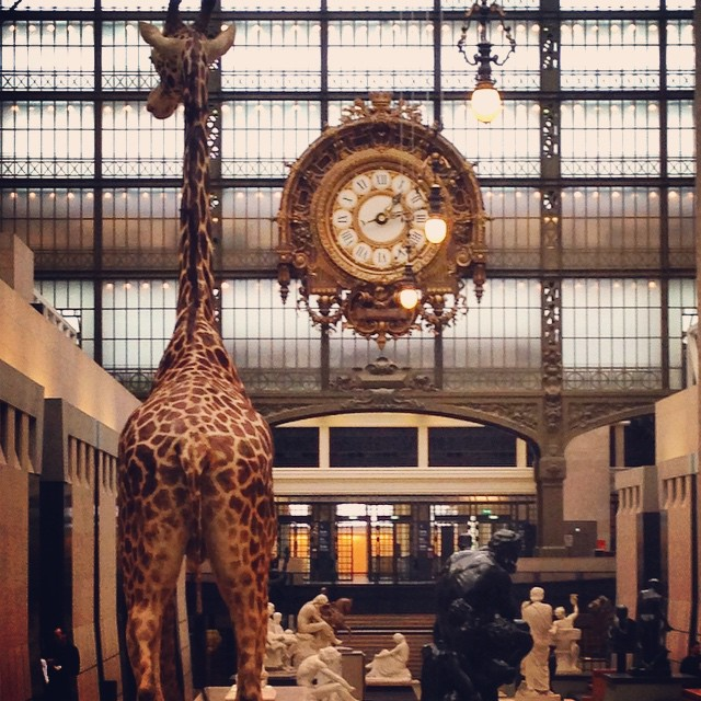 Hello petite girafe !!