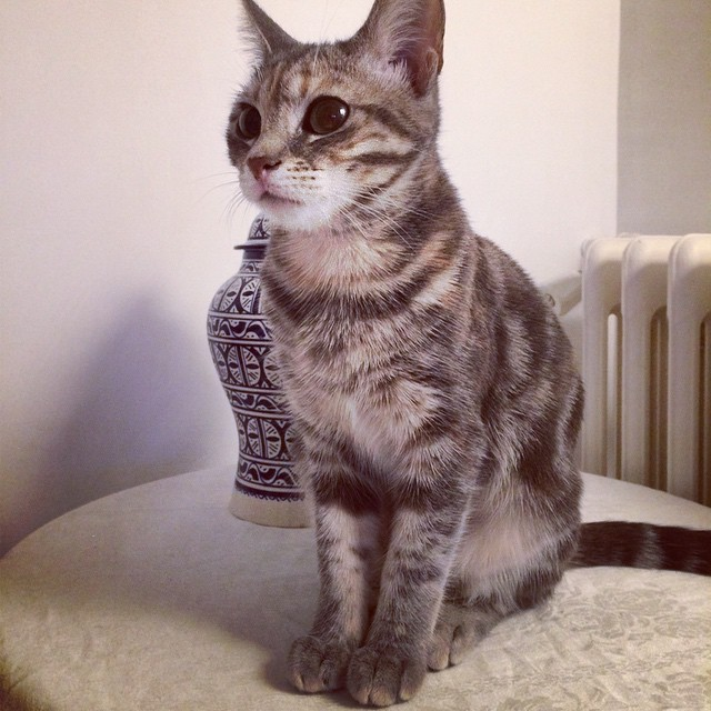 Garde à vous !!! #scarlett #cat #grandemuette #standingatattention #gardeavous #sentry