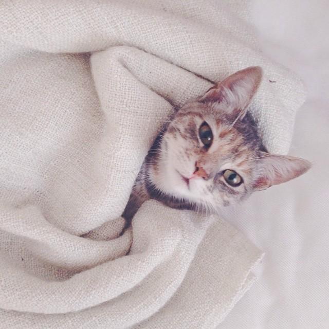 Après quelques semaines très chargées, enfin est venu le temps du repos. Scarlett en profite aussi ! #scarlett #cat #sundayrest