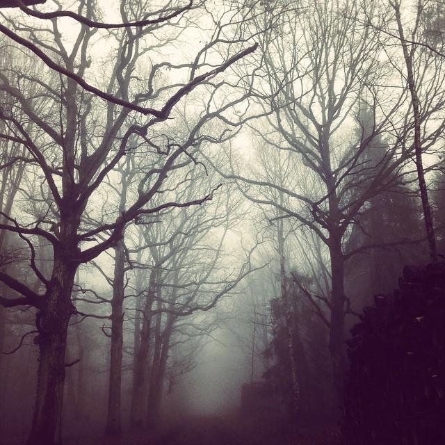 La rando la plus loufoque de l'année (où tu prends PAS UN SEUL des itinéraires prévus) mais avec des jolis paysages de brume et plein de champignons gelés ! #rando #ilovefall #ilovewinter